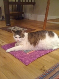 Mystery the cat loves his mat -- the Pootie Pad
