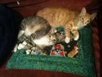 These kitties wouldn't let their humans sleep. Solution? Put the Pootie Pad in another room.