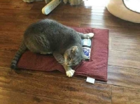 Cat lying on a Pootie Pad