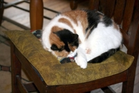 Patches' mommy made a nice Pootie Pad place for her on a chair.