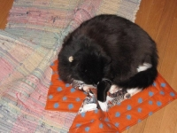 Lizzie's sister, Flower, has her own Pootie Pad -- no problems with sharing!